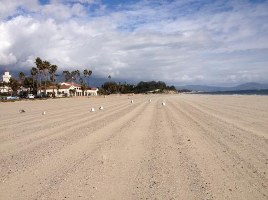 meeuwen Santa Barbara